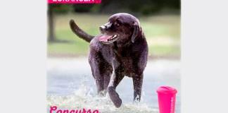 Eukanuba sortea 2 premios para perros