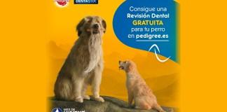 Revisión dental gratis para tu perro con Pedigree