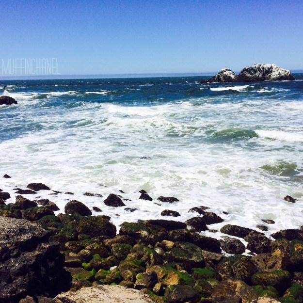 muffinchanel san francisco land's end park  ocean