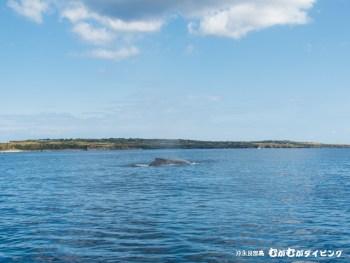 クジラ近し!呼吸音が大音量