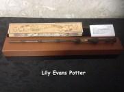 ไม้ของ Albus Dumbledore