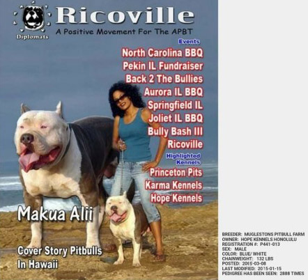 Tri Color Pitbull Breeders In Indiana | mountainstyle co