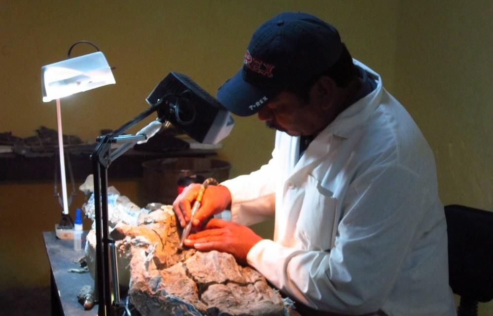 Tlatolophus. Juan Miguel Contreras-Fotógrafo técnico del Instituto de Geología.