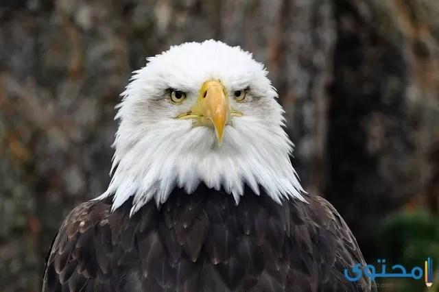 اسماء الطيور الجارحة 2020 موقع محتوى