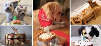 tipos de pasteles para perros