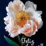 Feliz Jueves 75 Gifs E Imagenes Para Compartir Frases Y Mensajes