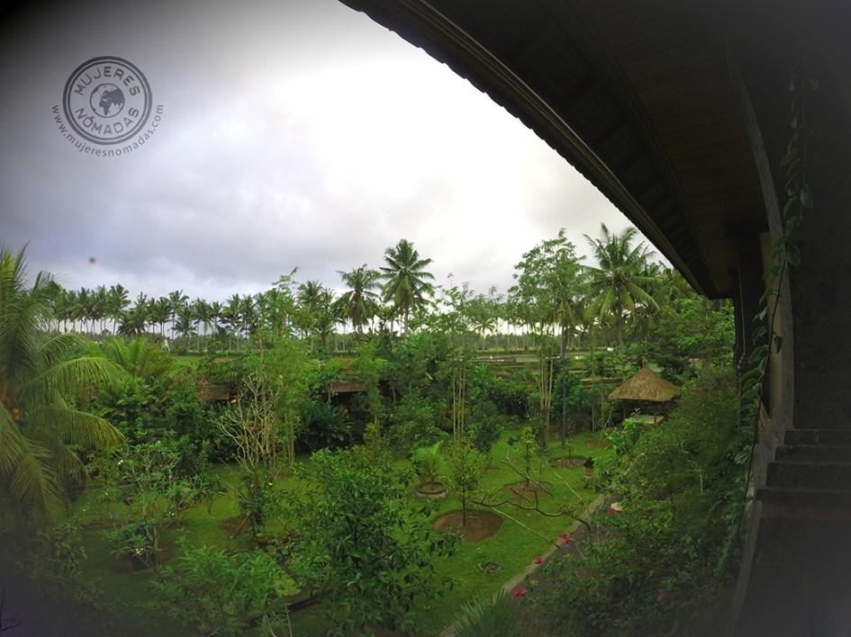 Imagen de la majestuosa vegetación balinesa. Ubud verde.