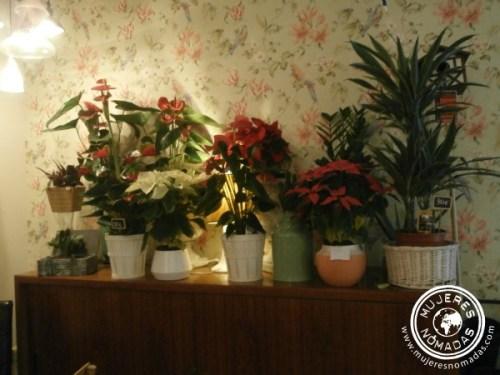 Las plantas del café botánico