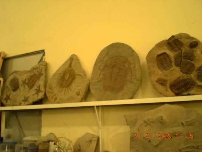 Fosiles en AlnifF