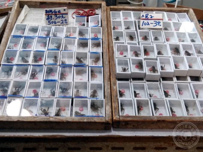 Puestos de grillos en el mercado.