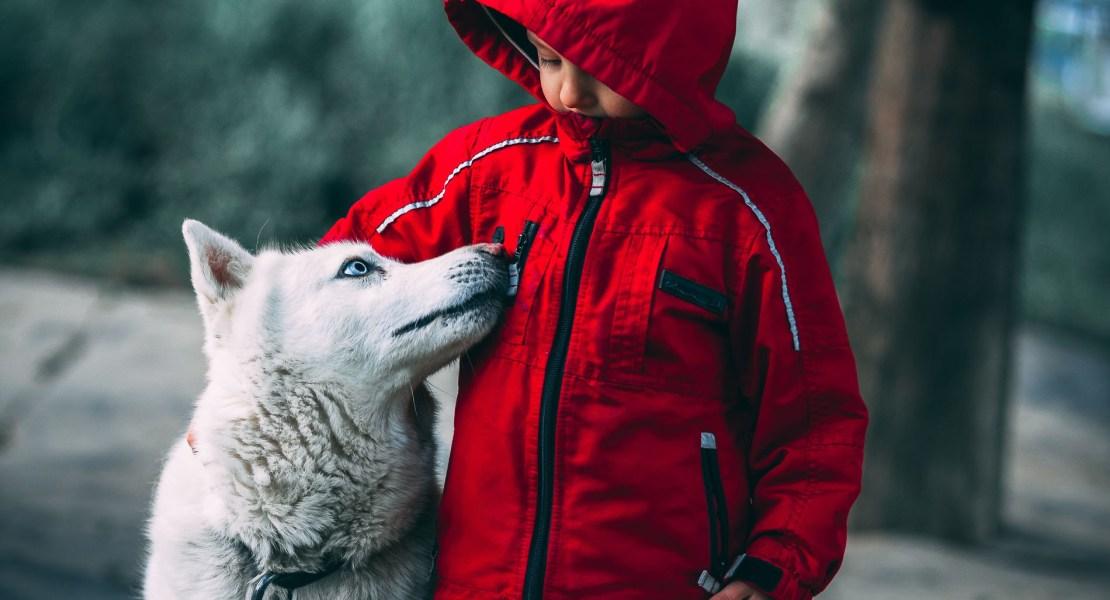 Que viene el lobo