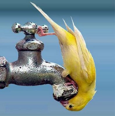 birds-also-need-water