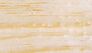 ロッジポールパイン木肌