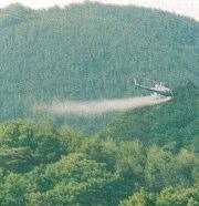 殺虫剤を使用していない原料の無垢フローリングはありますか?