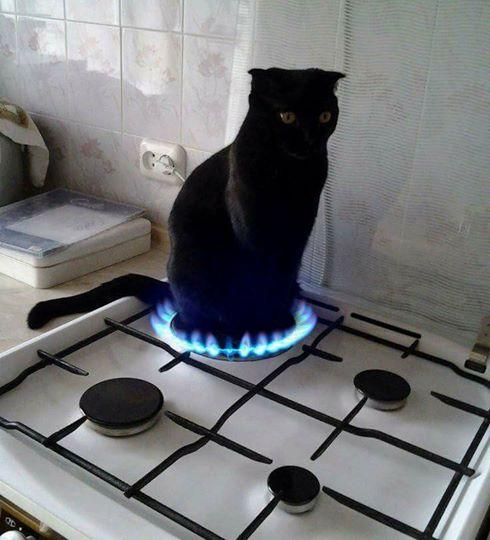 Gato preto no fogão