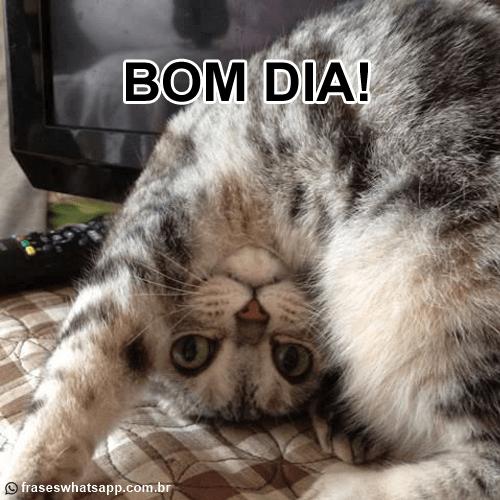 Bom dia - Gato de ponta cabeça