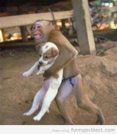 É só um macaco carregando um cachorro. Normal!
