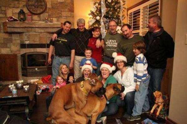 Família tirando foto no natal e cachorros atrapalhando o momento