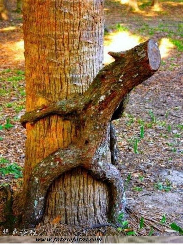 Tronco de árvore com sentido duplo
