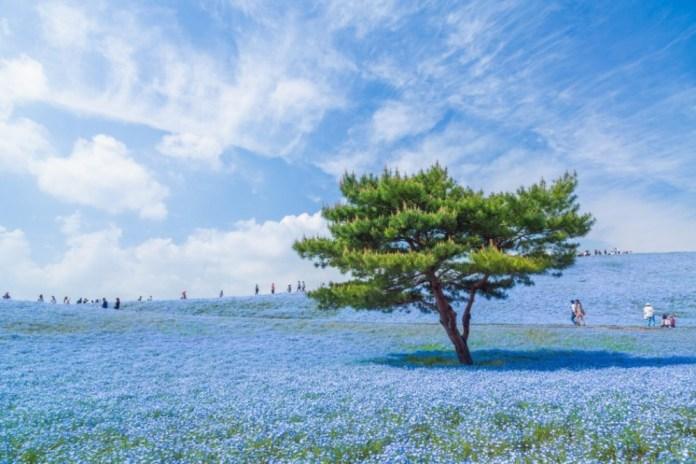 japao azul