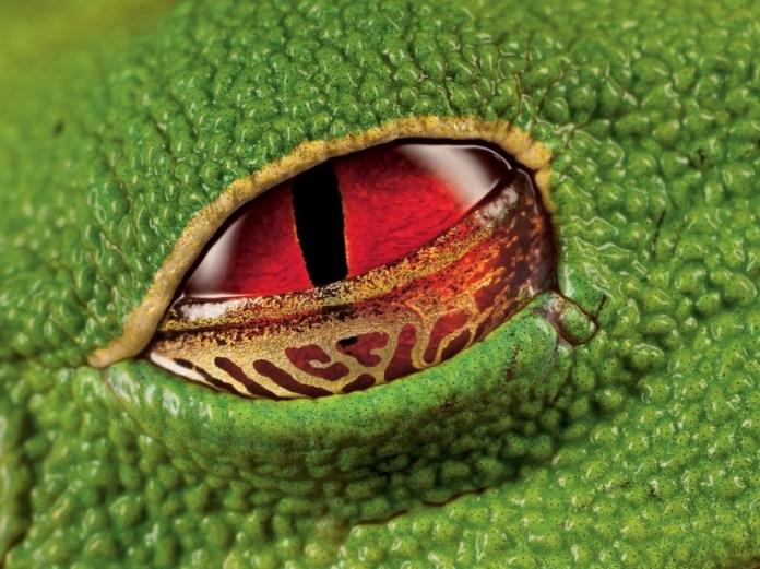 olhos rã