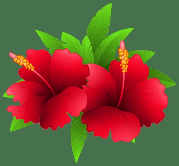 Flores Png Fundo Transparente
