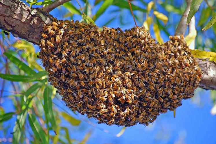 скачать игру swarm через торрент