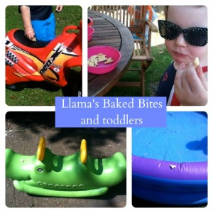 Llama's Snacks