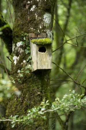 Making Homes For Wildlife