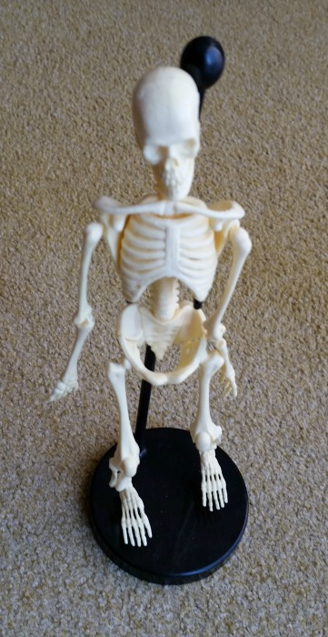 Human Body Factivity Box Set Skeleton Model