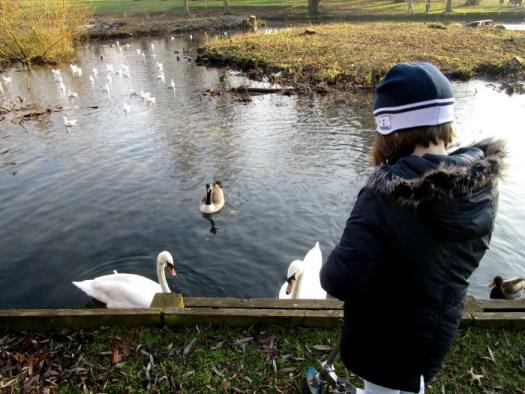 Beddington Park