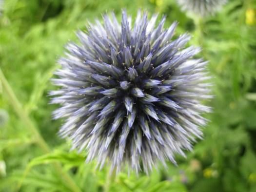 Lullingstone Castle World Garden flower 1