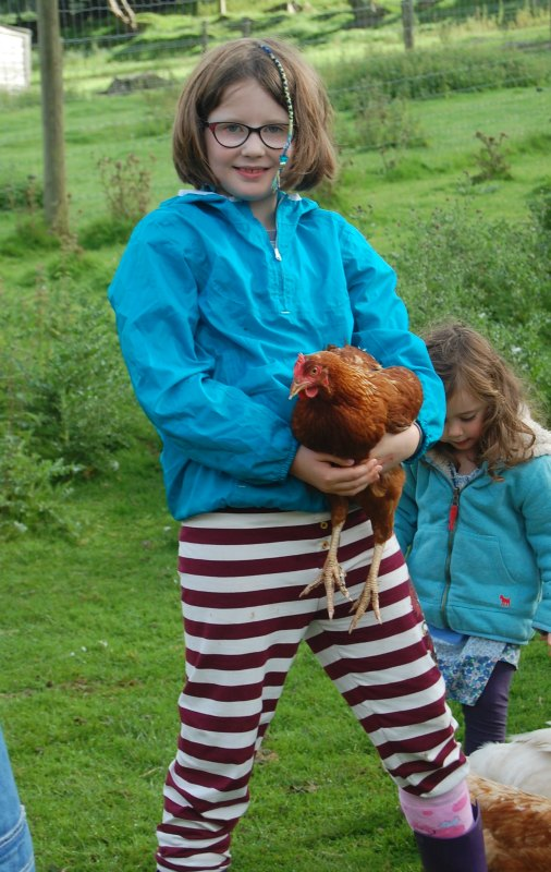 cuddling hen at Coombe Mill