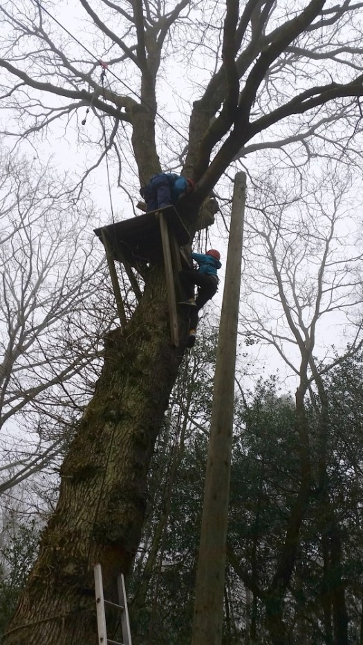 Climbing the tree to the zipwire at PGL Marchants Hill