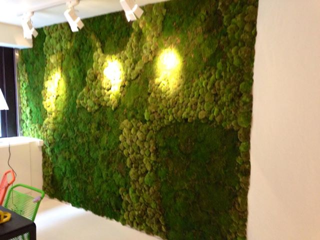 Green Walls Mummie Plants