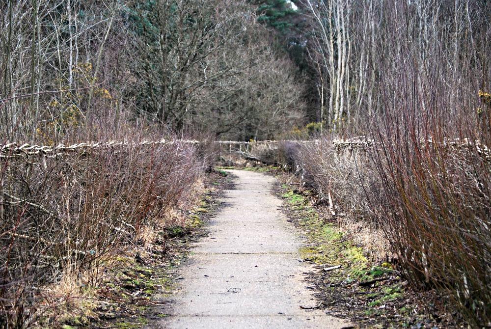 Fleet Pond pathway