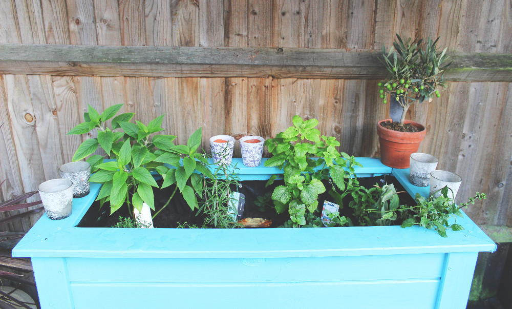 Herbs to infuse in gin