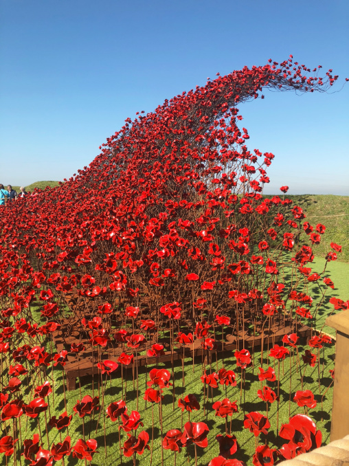 Wave of poppies at Fort Nelson