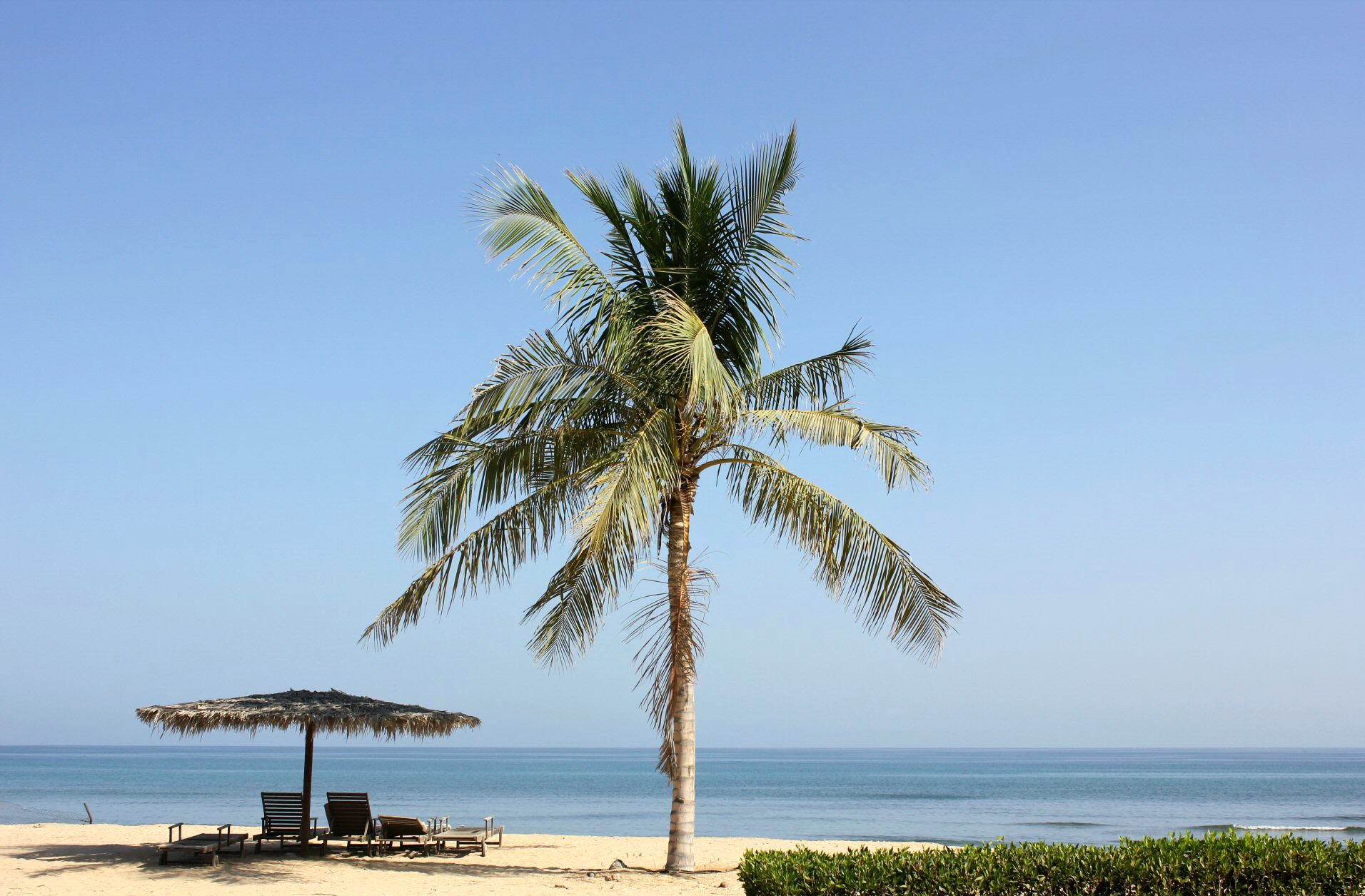 Two loungers under a palm umbrella and a palm tree on the beach at As Sifa, not far from Muscat, Oman - my nine reasons to visit Oman with kids