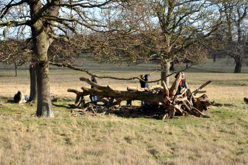 National Trust 50 things, log den, den building, mumof2