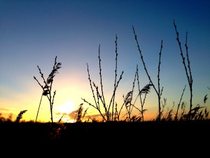 Wicken Fen, mumof2, sunset