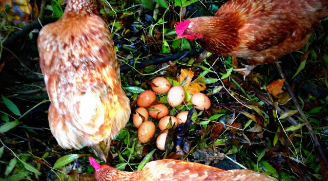 chickens, country kids, mumof2