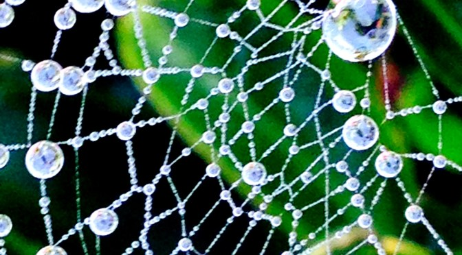 spiderweb, dew, mumof2