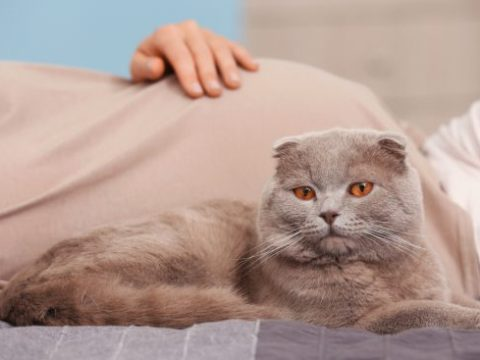 Why Cats And Pregnancy Can Be Dangerous