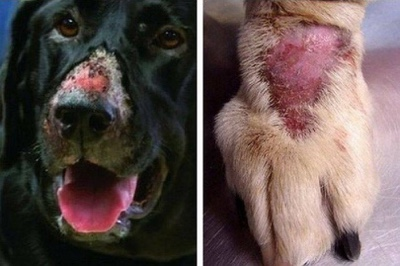Warning To Dog Owners-Alabama Rot Disease