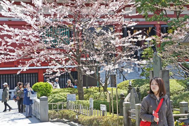 Sakura en tokyo