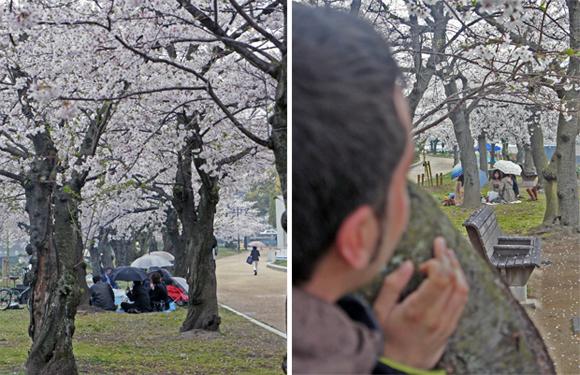 Sakura en Hiroshima