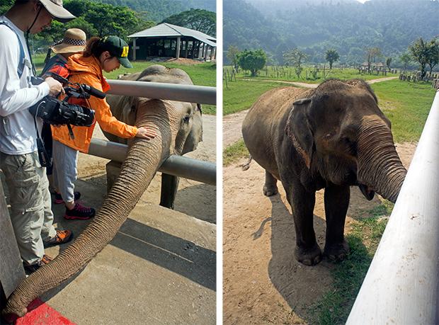Elefantes-en-el-Elephants-Nature-Park