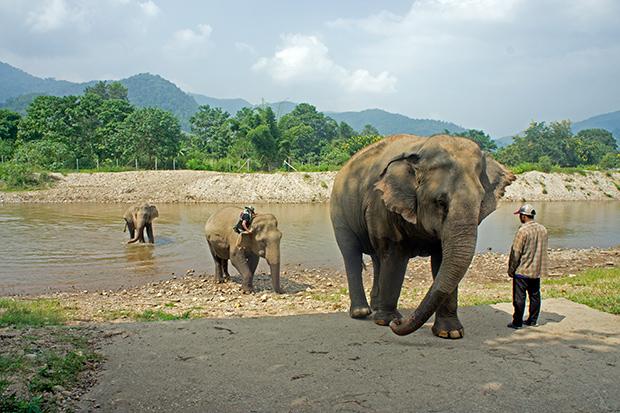 Elephants-Nature-Park-Rio