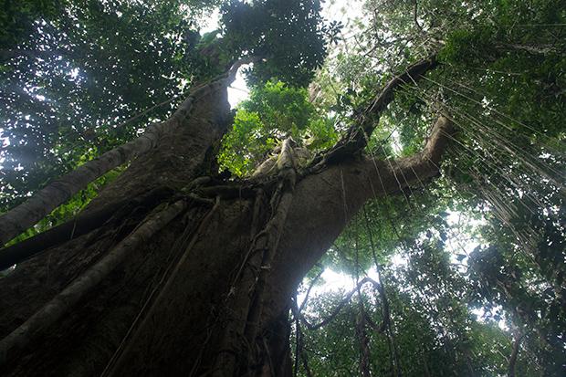 Árboles-de-500-años-2